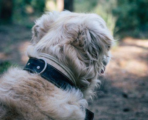 Accesorios para mascotas Almería