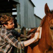 Productos para caballos almería