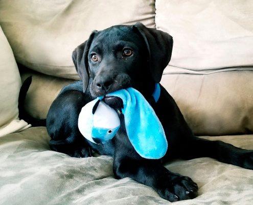 juguetes para mascotas almería