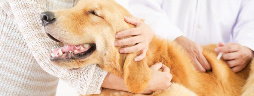farmacia veterinaria almería