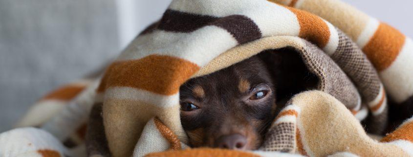 camas para mascotas almería