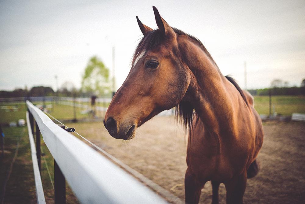 tienda para caballos almeria