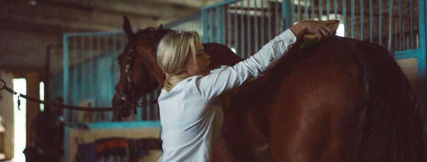productos caballo almeria