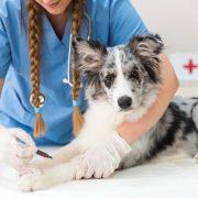 farmacia veterinaria almeria
