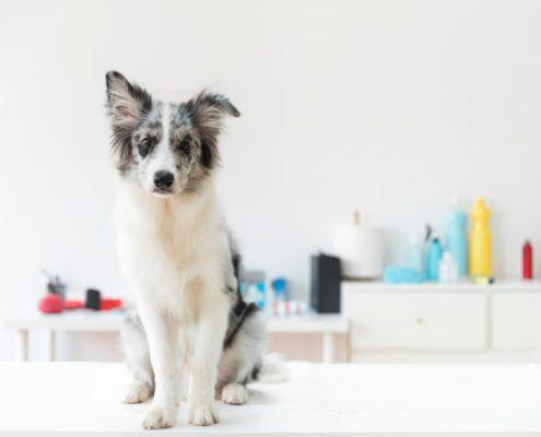 tienda mascotas almeria